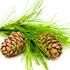 масло кедра активные ингредиенты Phy-MongShe